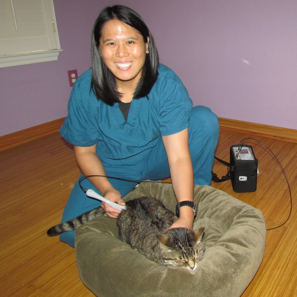 cat laser therapy session